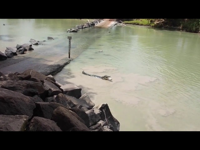 Crocodile Snags Fishermans Catch at Cahill Crossing