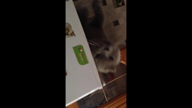 Как наш Джерик отдыхает на холодильнике