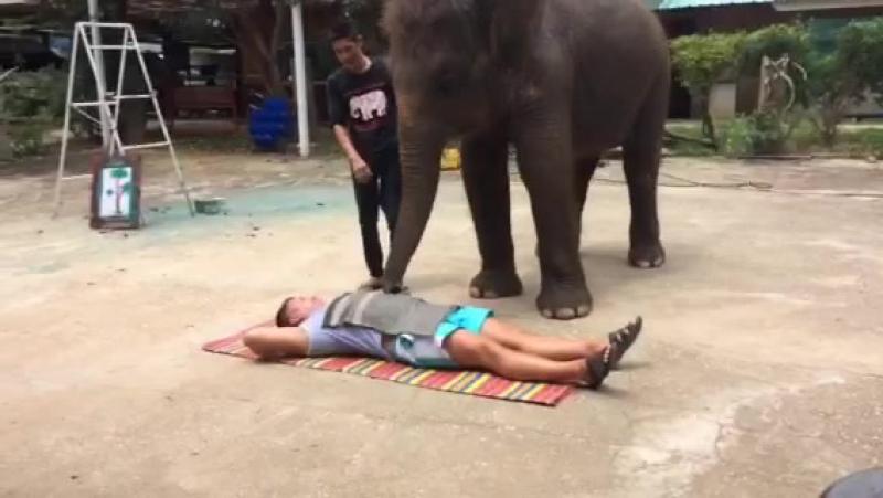 Слоновий эротический массаж🙊