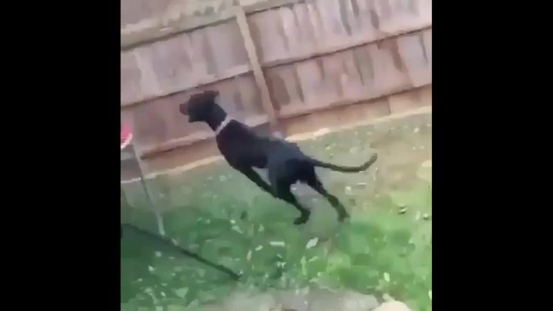 Собака ебёт ребенка,второй в очереди