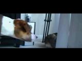 Aufnahme von KATZE vs. HUND (Bestie) und Katze GEWINNT.... [WITZIGE VIDEOS]