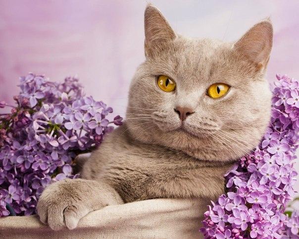 Тайная сила кошек: правда или вымысел   Кошки – это самый популярный в