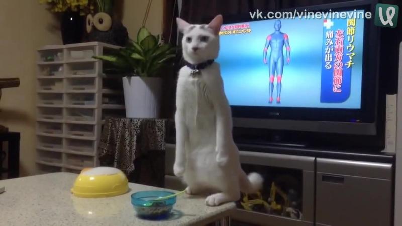Восстание котов