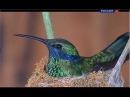 Колибри Самоцветы животного мира