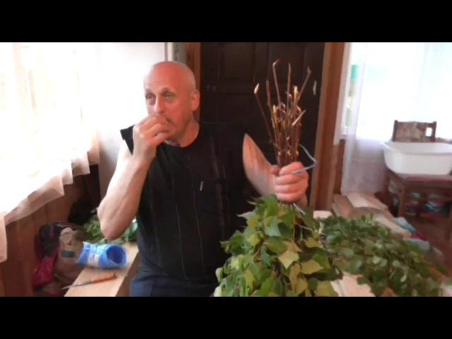 Изготовление берёзовых веников Как правильно заготовить и связать веники для бани