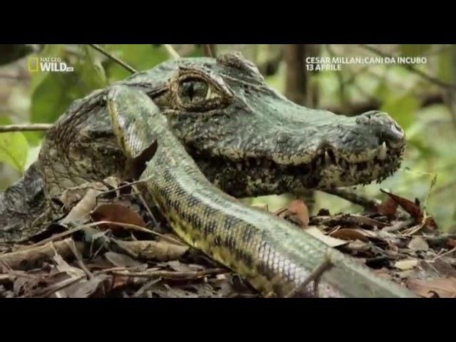 02-Pantanal un'immersa pianura alluvionale - Nat Geo Wild Brasile