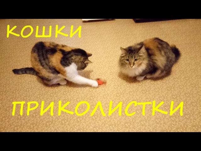 Приколы с кошками, обхохочешься. Видео на YouTube. Кошки приколистки.