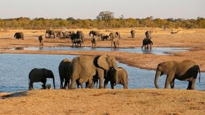 Слоны в дикой природе