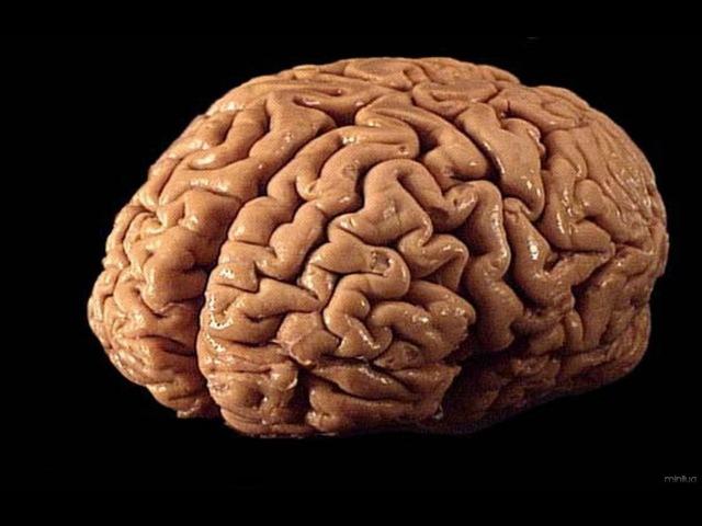 O Cérebro (Dublado) Documentário Completo [History Channel]