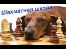 Урок 1. Элементы Шахматной Стратегии