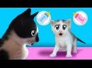 КОТ МАЛЫШ и его СЕКРЕТ ! КОШЕЧКА МУРЗЯ родила котенка Дайте ИМЯ милашке ! ПРИВЕТ