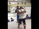 Жгуты Cobra Pro MMA