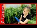 ПЕРЕЦ болгарский сладкий Подкормка №1 удобрение в период плодоношения для перца томатов огурцов