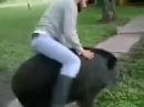 Deja Vu boar