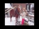 Секреты запряжки лошади в русскую упряжь.