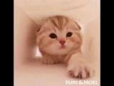 Отвлекитесь от познания сути Вселенной. Отложите суету и самоанализ. Посмотрите на котика в пакете.
