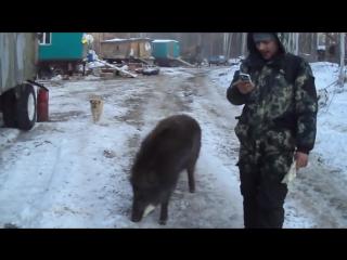 Кабан Васёк