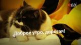 Завтрак в постель с Ильей Лазерсоном - Суп из сельдерея, фенхеля и груши