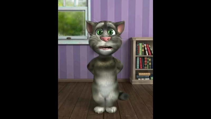 БОТИР КОДИРОВ (Cat)😸