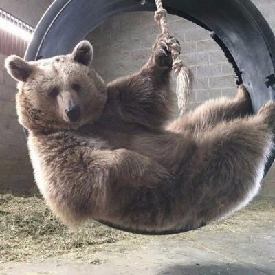 Никита Медведь