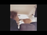 Классные приколы про животных. Смешная подборка с котами и кошками. Самые смешные видео (online-video-cutter.com) (1)