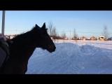 На лошадках