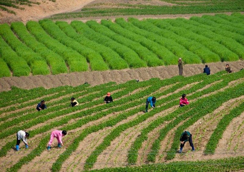 TTrjE63OoyA - Что нельзя фотографировать в Северной Корее: 30 фото