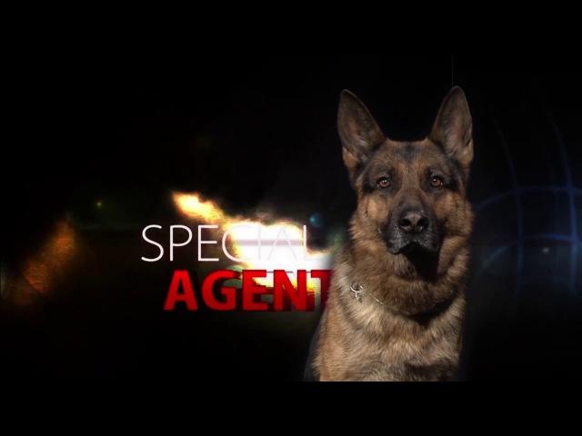 Специальный агент