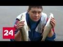 Коломенской барменше, убившей клиента, грозит 15 лет тюрьмы - Россия 24
