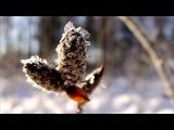 Белым снегом  Кузнецова Елена