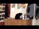 Смешное видео! Полный мега ржач, черный кот, приколы с животными, угар, лучшие