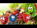 Веселая песня про ягоды, Ягода малина, ягода черника...