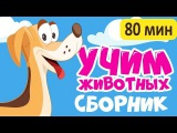 2017 БОЛЬШОЙ СБОРНИК! Учим животных - смотреть все серии! развивающие мультики для детей на русском