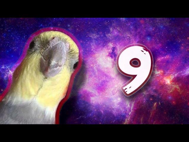 10 MIN OF BIRB MEMES 5