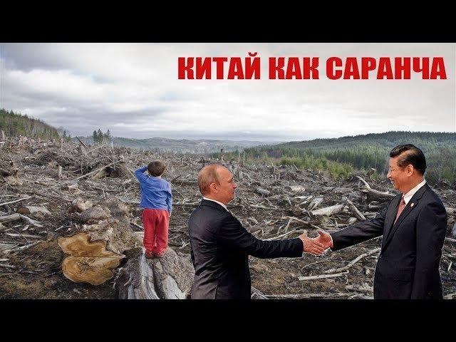 ПЕНЬКИ ВМЕСТО ТАЙГИ КАК КИТАЙ ВЫРУБАЕТ РОССИЮ 30.11.2017