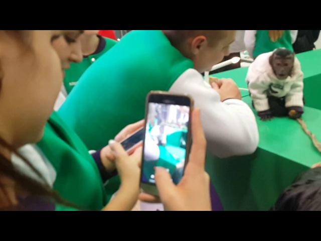 2016.12.10 Обезьяна капуцин Масяня. Новогодняя акция Мегафон.