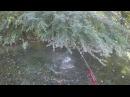 Silure à vue en float tube au bbz-rat spro, attaque en direct - go pro HD