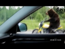 Bear Riding a Motorcycle