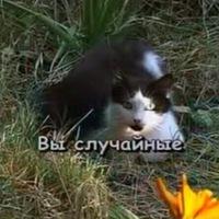 Агата Полевая | Калининград