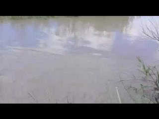 Необычная рыбалка в грязной воде