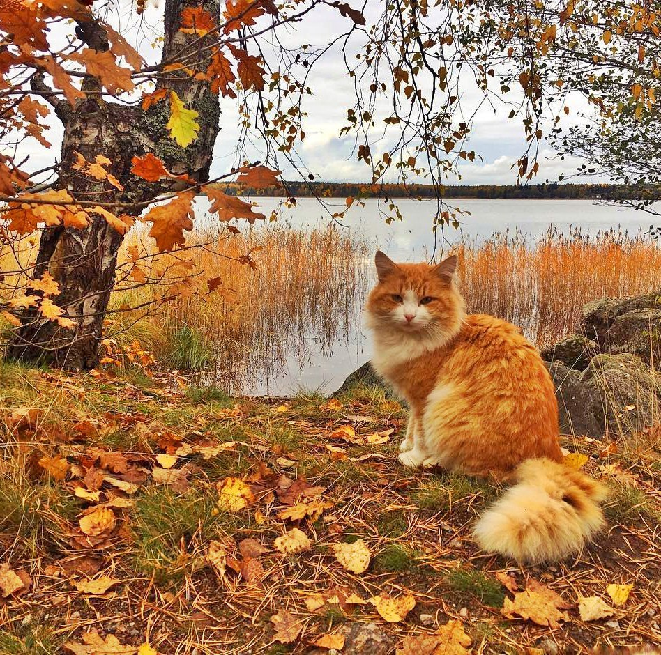 Осенний денек картинки смешные