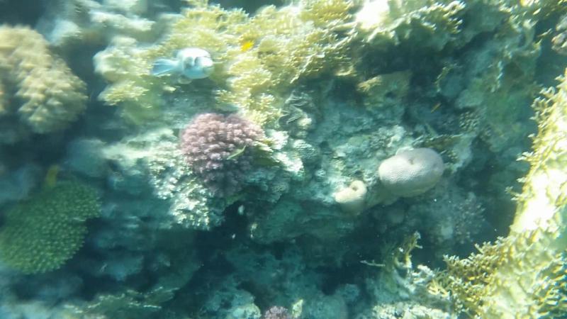 Красное море. Оператор подводных видео съемок Герасимов Юрий.