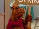 Alf Quote Season 1 Episode 13 Альф Про дом