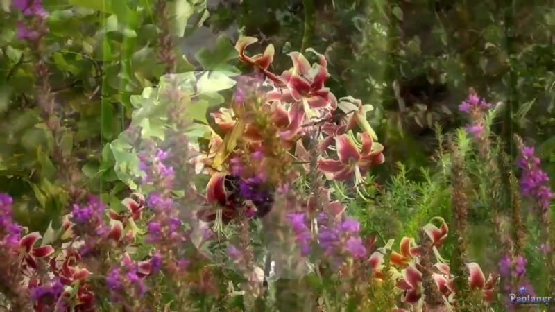 Цветы августа. Ботанический сад Петра Великого, г. Санкт-Петербург. Август 2017 года.