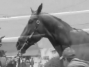 Horse Racing Apologize
