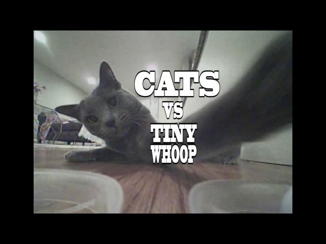 Cats VS Tiny Drones - Kitties of the World VS Tiny Whoop - When Cats Attack Compilation