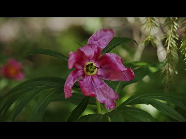 Увидеть лес (Про реликтовый лес России)