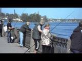 Fishmens on Neva river.Рыбаки на Неве.
