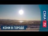 Кони в городе: Хабаровск