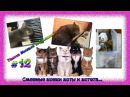 Смешные кошки, коты и котята. Такие Милые и Смешные 12